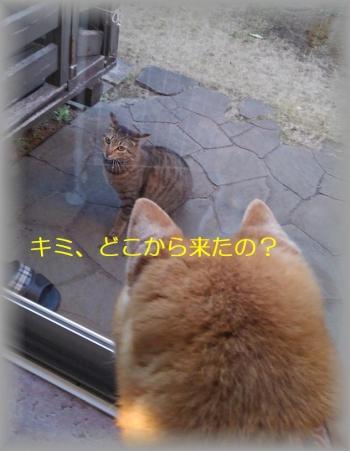 Photo_20200325163001
